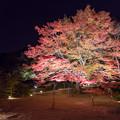 写真: 御船山楽園 紅葉 ライトアップ 5