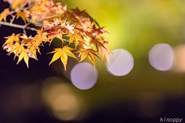 御船山楽園 紅葉 ライトアップ 7