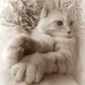写真: かわいい手:セピア