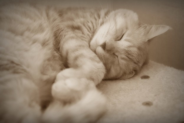 Photos: Sepia is sleeping.