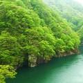 写真: 初夏の新緑