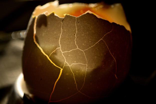 タマゴの殻3)