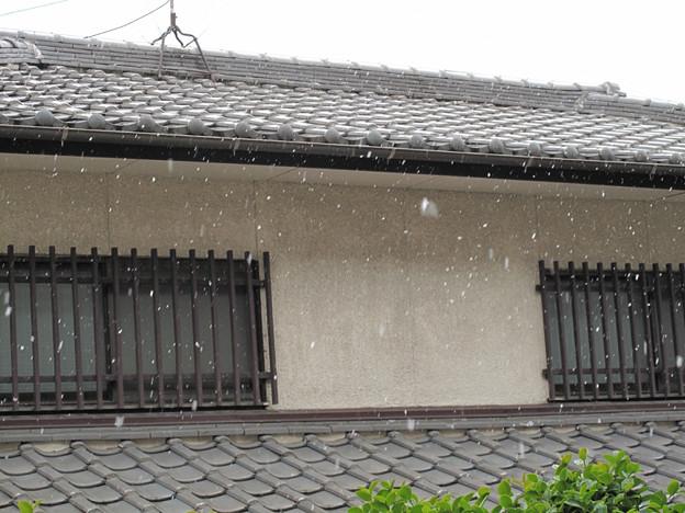 写真: IMG_8800 初雪
