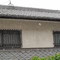 Photos: IMG_8800 初雪