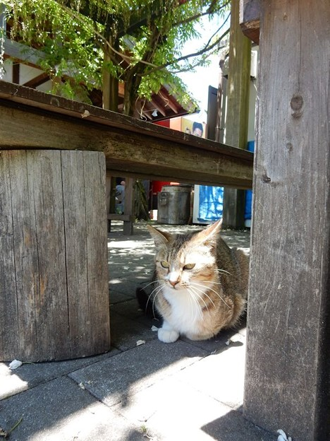 写真: 2003 作手猫