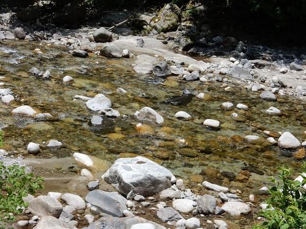 写真: 2059 きれいな川みっけ