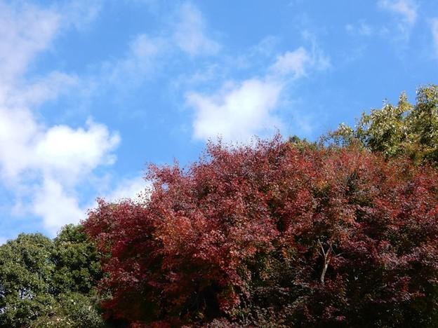 写真: 2 紅葉の季節