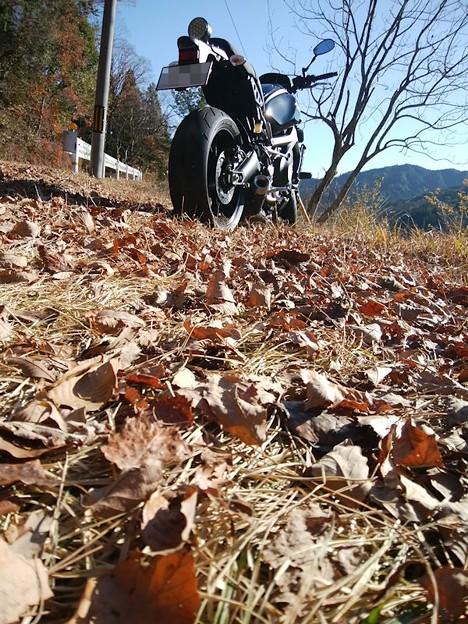 写真: 枯葉の中で