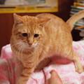 写真: 2010年10月02日のボクチン(6歳)