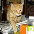 写真: 2008年11月06日のボクチン(4歳)