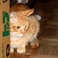 写真: 2008年11月16日のボクチン(4歳)