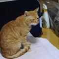 写真: 2009年11月20日の茶トラのボクちん(5歳)