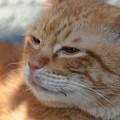 写真: 2009年11月28日のボクチン(5歳)