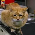 写真: 2010年12月06日の茶トラのボクちん(6歳)