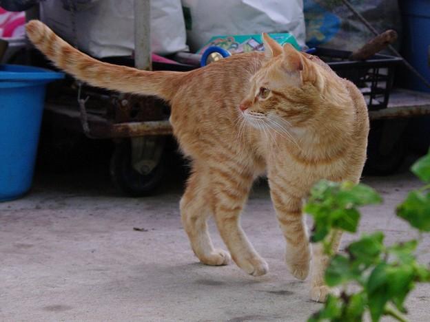 写真: 2008年12月12日の茶トラのボクちん(4歳)