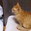 写真: 2009年12月22日の茶トラのボクちん(5歳)