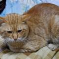 写真: 2010年01月03日のボクチン(5歳)