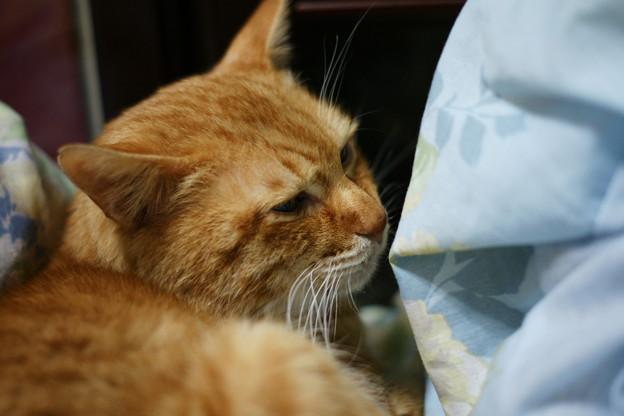 写真: 2010年01月05日のボクチン(5歳)
