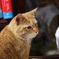 写真: 2009年02月17日の茶トラのボクチン(4歳)