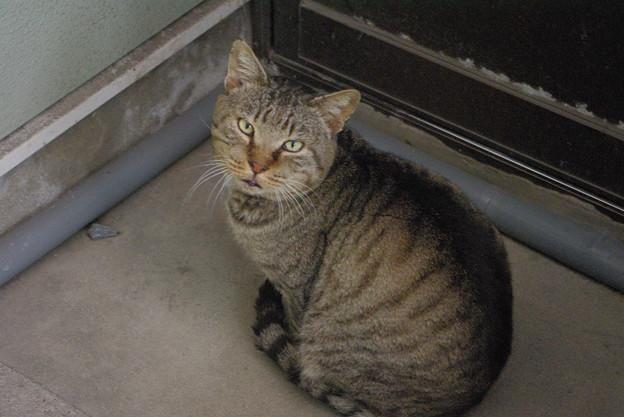 写真: 2018年1月14日餌を要求する放浪猫