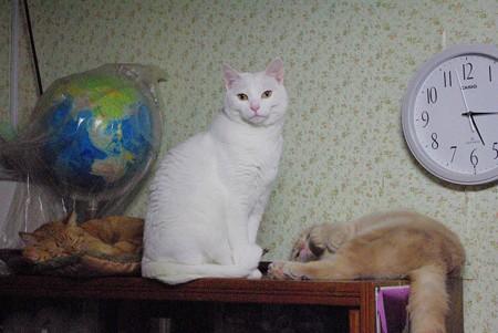 2017年12月27日の我が家の4歳の猫たち3匹