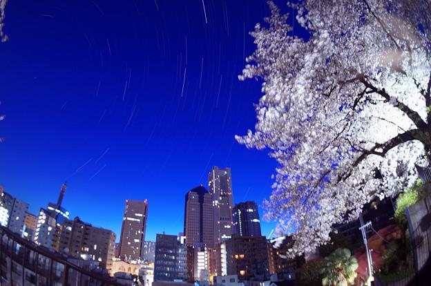 写真: ランドマークと桜と星と
