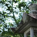 灯籠と桜若葉
