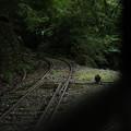 写真: 旧井川線跡