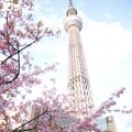 写真: 晴空塔
