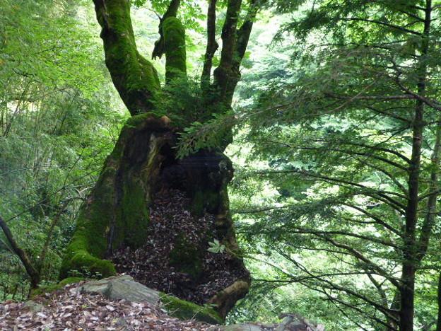 徳島側へ下る道沿いの木のうろ