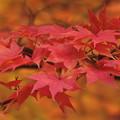 紅く燃える秋