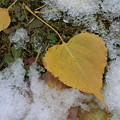 粗目雪と落ち葉