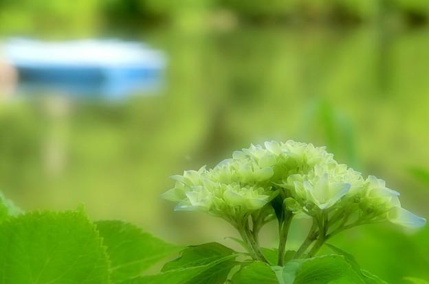 写真: 水辺に咲くGreenグリーン~♪