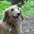 Photos: Piraの笑顔が戻ります様に~今日は腫瘍摘出手術です(o;ω;o)
