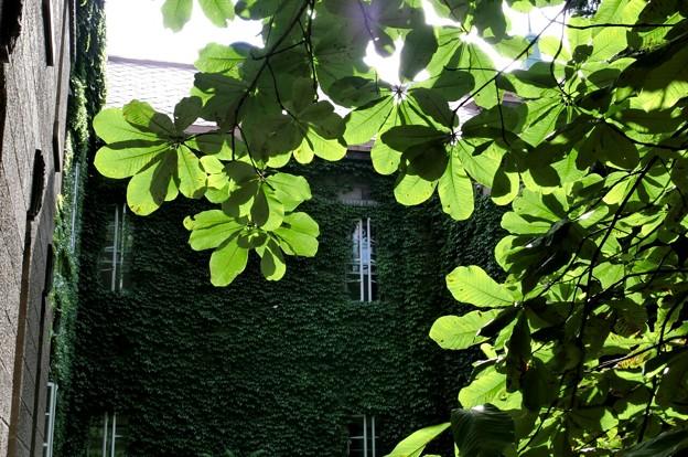 木漏れ日Green~♪