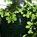 写真: 木漏れ日Green~♪