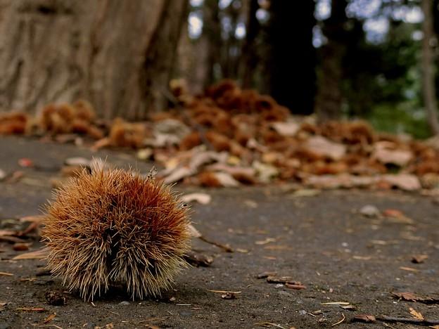 写真: 小さい秋見つけた~♪
