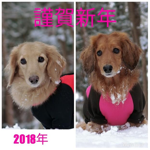 写真: 2018年も宜しくお願い致します