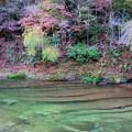 写真: 晩秋の養老川
