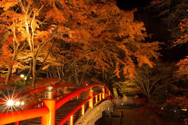 紅葉ライトアップ at 河鹿橋 part2.