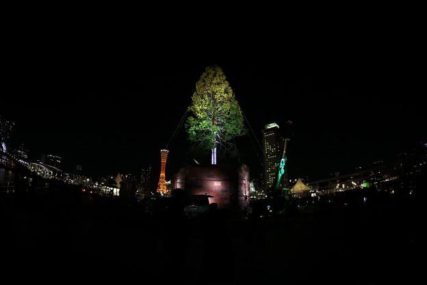 世界一のクリスマスツリー05