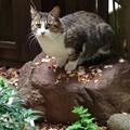 庭石と野良猫 2014.11.8