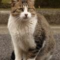 Photos: 門前の野良猫?