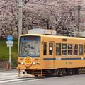Photos: 2017年4月、飛鳥山にて…(2)