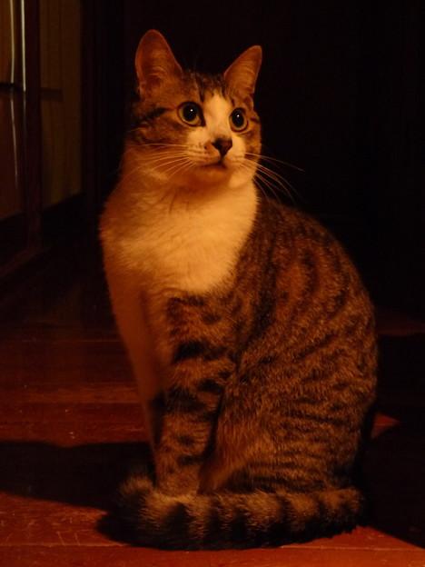 Photos: 夜遅く、我が家の玄関で「お出迎え」!?(1)