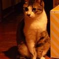 写真: 夜遅く、我が家の玄関で「お出迎え」!?(2)
