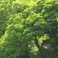 写真: タクシーの車窓から…緑のグラデーション