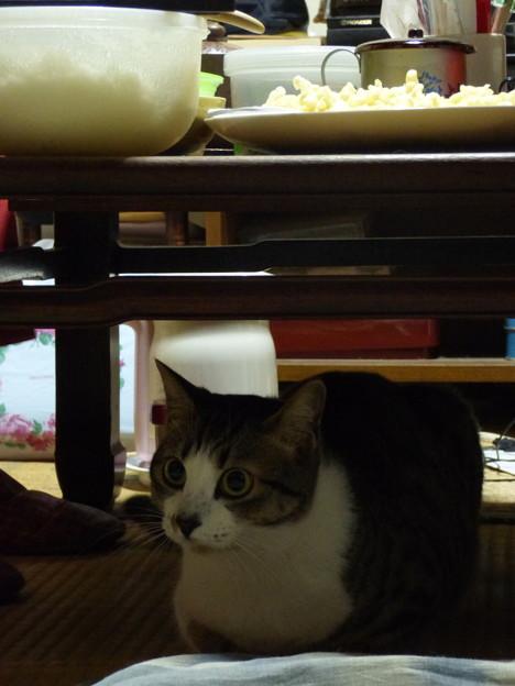 写真: 人間は「食卓」、猫は「上屋」。