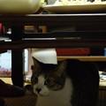 Photos: 人間は「食卓」、猫は「上屋」。
