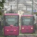 Photos: 雨の庚申塚に集う「ローズレッド」